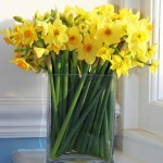 Narcissi Flowers