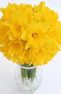 Daffodil Bouquets from Jersey