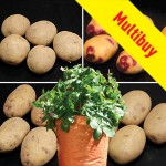Taster Pack Potatoes (2kg) plus 4 Patio Planters Mix 1, £15.99