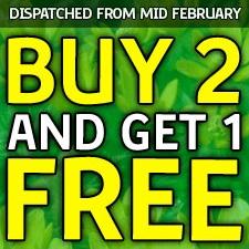 33% Extra Free + Free Planter