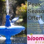 Garden plant peak season offer