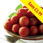 Tomato Gardeners Delight 12 Jumbo Ready Plants. Only £9.99 Save £3.99