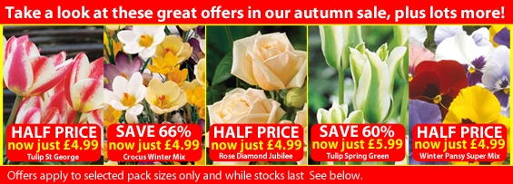 Save up to 66% in the Van Meuwen Autumn Sale