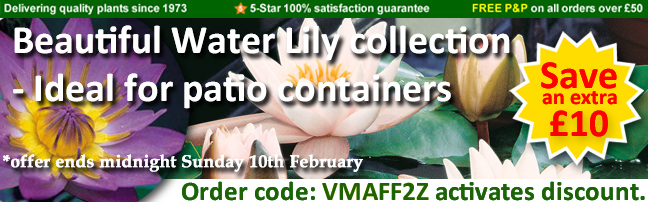 Get £10 off the bumper water lily collection