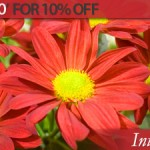 The Merry Month of May 10% Discount