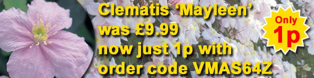 Buy a superb clematis plant for just 1p this weekend!