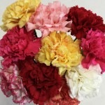 10 Mixed Christmas Carnations, only £10.99