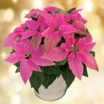 Princettia Plant, £14.99