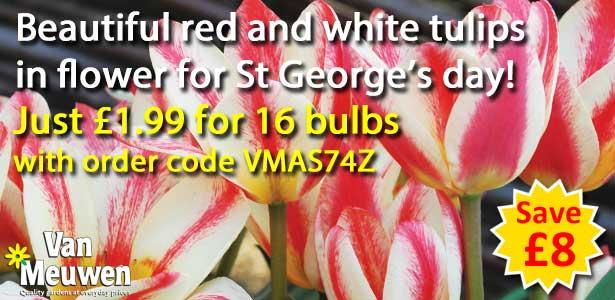 Tulip St George £1.99 offer