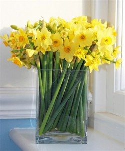 Scented Narcissi from Fineflora.com