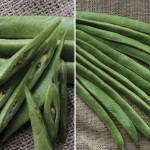 Runner Beans 6 XLarge Plants, just £6.99!