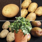 Taster Pack Two 2kg Plus 4 Patio Planters only £18.99!
