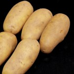 Charlotte Seed Potatoes 1kg, only £3.99!