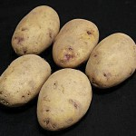 Kestrel Seed Potatoes 1 Kg, only £3.99!