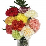 10 Mixed Carnations + FREE Chocolate Hearts, £10.99