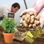 Spring Jersey Royal New Potatoes 4lbs (1.8kg) with Jersey Grown Mint + Jersey Butter, just £14.99!