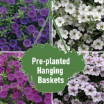 2 Petunia Million Bells Trailing Mix Pre-Planted Hanging Baskets, only £19.98!
