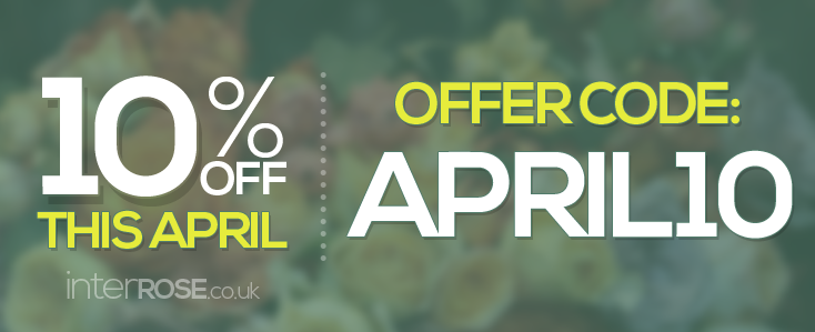 10% OFF THIS APRIL