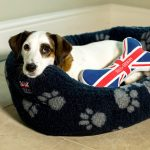Help for Heroes pet accessories - modelled by Peggy