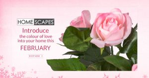 Valentine's day , Offers