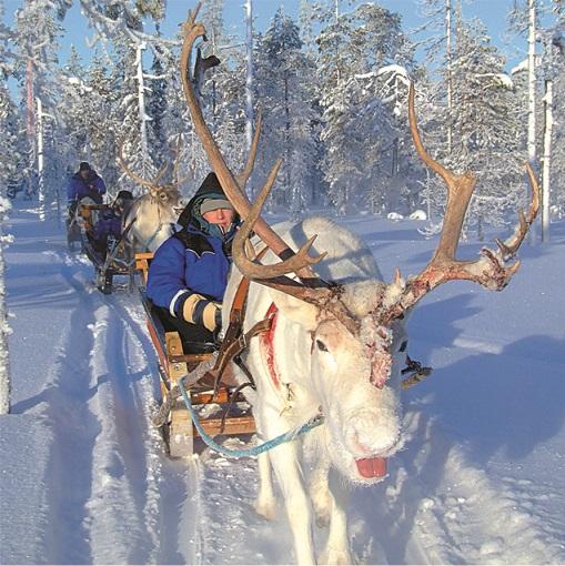 Reindeer ride